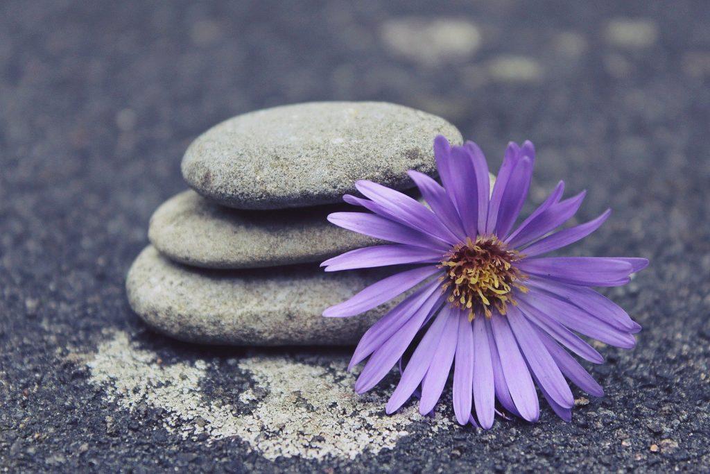 Ambiance zen avec fleur violette